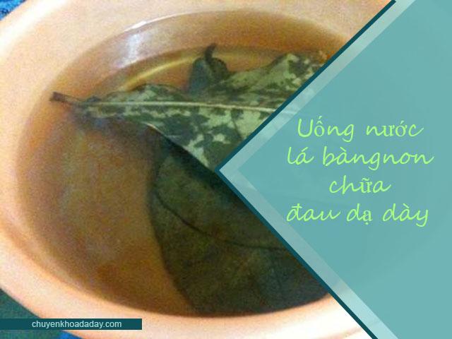 Uống nước lá bàng non thường xuyên để chữa đau dạ dày