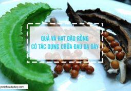 Quả và hạt đậu rồng có tác dụng chữa đau dạ dày