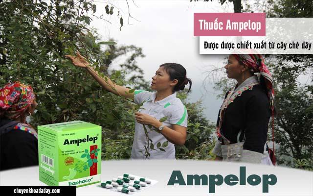 Thuốc Ampelop được chiết xuất từ lá chè dây