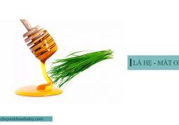 Kết hợp lá hẹ và mật ong chữa chứng ho do trào ngược acid dạ dày