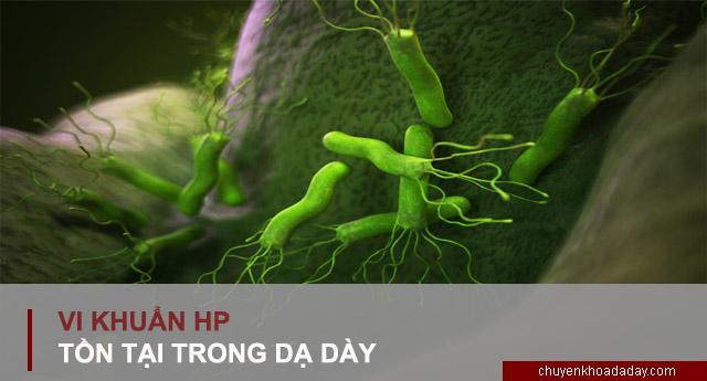 Vi khuẩn Hp tồn tại trong dạ dày
