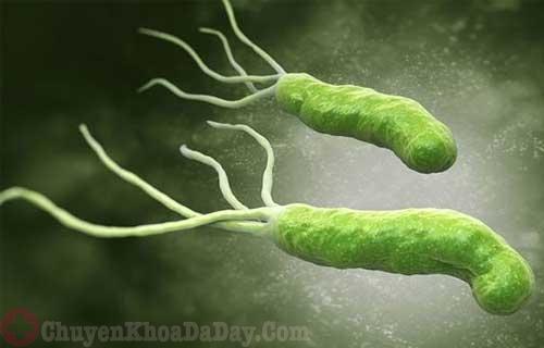Vi khuẩn Hp là một trong những tác nhân gây bệnh ung thư dạ dày