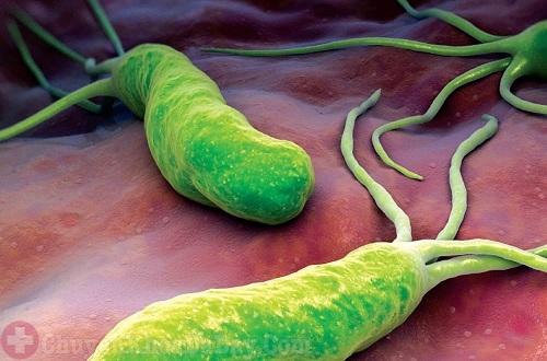 Vi khuẩn Hp có thể chữa được hoàn toàn