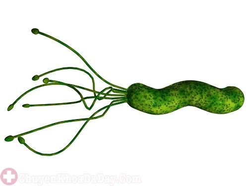 Vi khuẩn Hp có ở trong phân